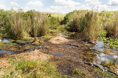 HighLight_Nelson_051_076