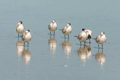 HighLight_Nelson_042_005