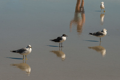 HighLight_Nelson_042_013