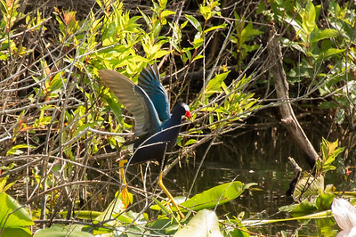 HighLight_Nelson_051_073