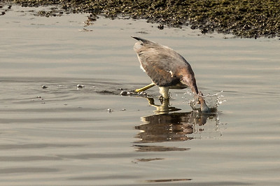 HighLight_Nelson_045_162