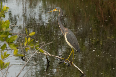 HighLight_Nelson_045_211