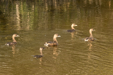 HighLight_Nelson_045_142