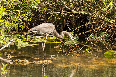 HighLight_Nelson_051_088