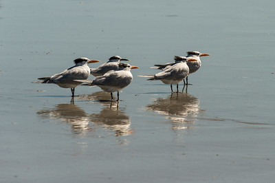 HighLight_Nelson_042_037