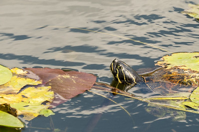 HighLight_Nelson_051_096