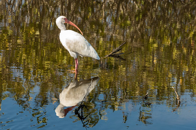 HighLight_Nelson_043_058