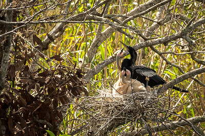 HighLight_Nelson_051_039
