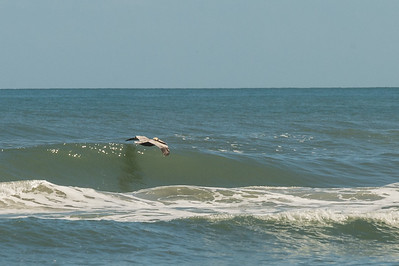 HighLight_Nelson_042_085