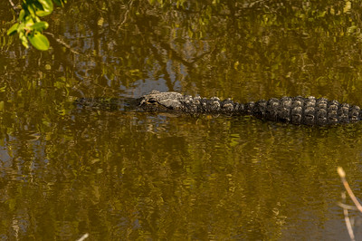 HighLight_Nelson_043_098