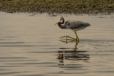 HighLight_Nelson_045_160