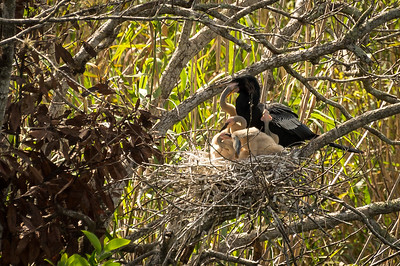 HighLight_Nelson_051_044
