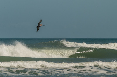 HighLight_Nelson_042_012