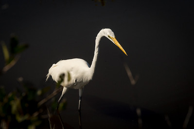 HighLight_Nelson_043_099