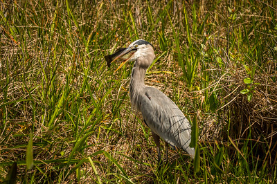 HighLight_Nelson_051_026