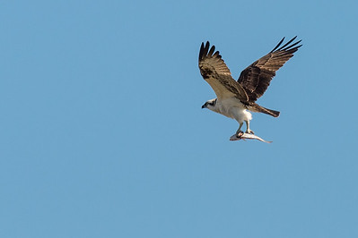 HighLight_Nelson_041_007