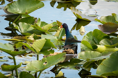 HighLight_Nelson_051_034
