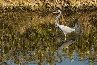 HighLight_Nelson_043_111