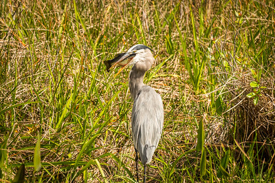 HighLight_Nelson_051_023