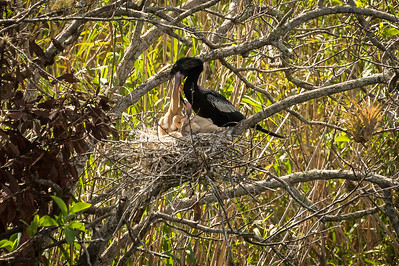 HighLight_Nelson_051_052