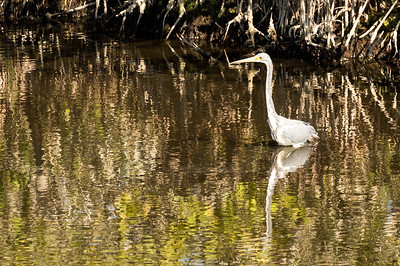 HighLight_Nelson_043_062