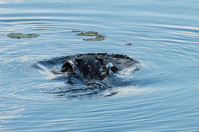 HighLight_Nelson_051_081