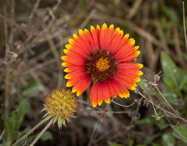 HighLight_Nelson_045_213