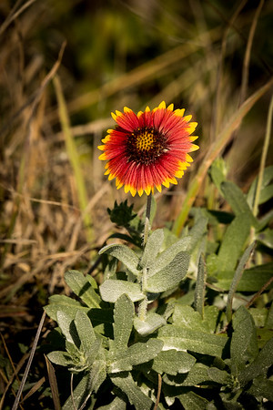 HighLight_Nelson_043_092