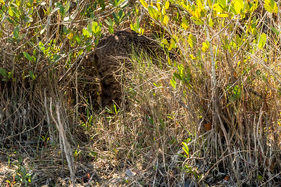 HighLight_Nelson_043_013