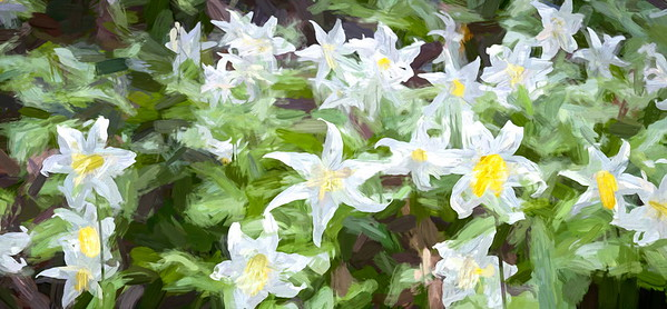 Avalanche Lilly Laughing Out Loud