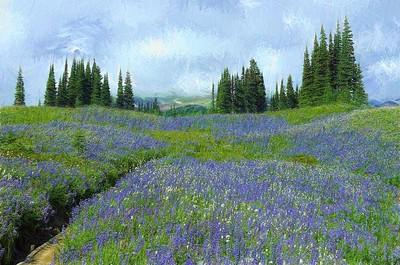 Endless Summer Bloom