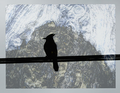 Blue Jay on a Wire