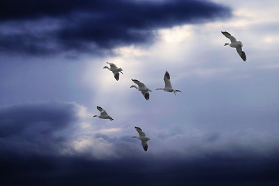 Soaring for Growth and Change