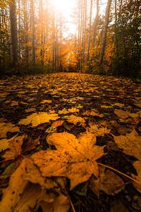 Golden Autumn Trail