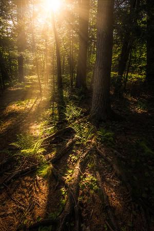 Magical Morning Woodland