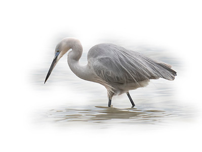Hybrid Heron