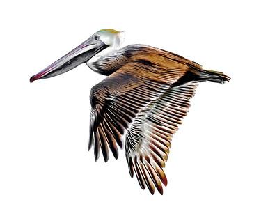 Flying Pelican 1