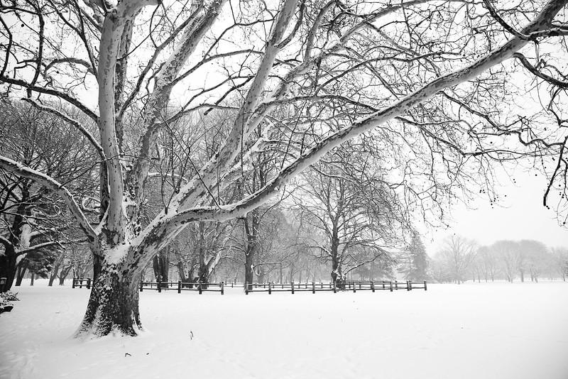 Gage Park Winter Wonderland