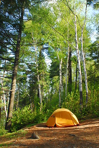 Camp among the birches
