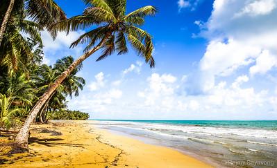 Coconut Trees in Puerto Rico