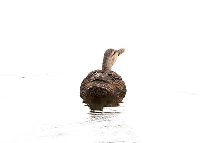 Bye Bye Duck 2