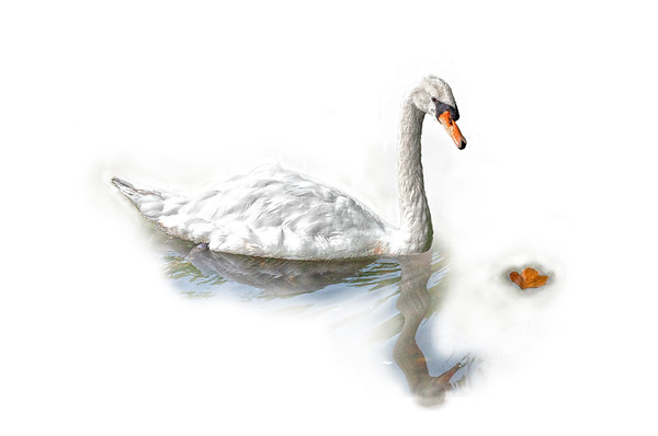 St Stephen's Swan
