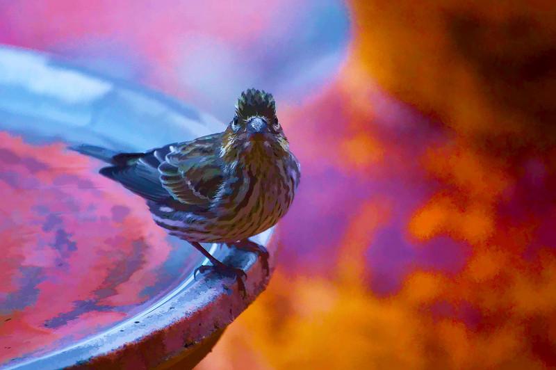 Bird On Bird Bath