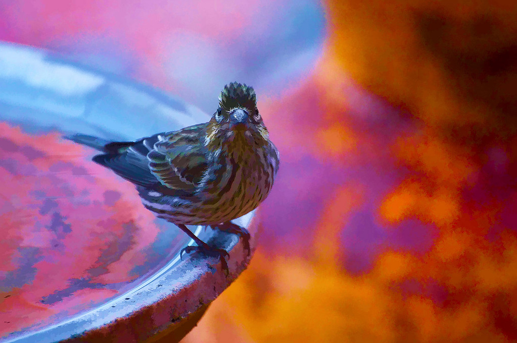 Bird On Bird Bath<br /> Sedona, Arizona
