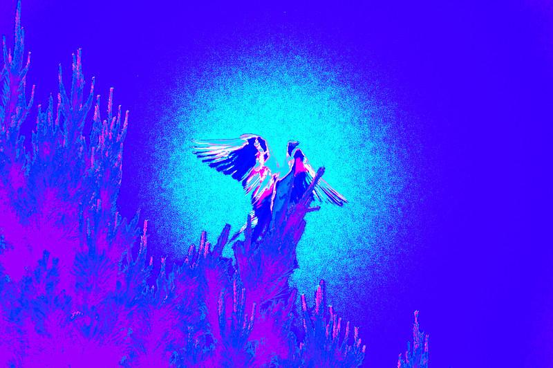 Great Egret<br /> Bodega Bay, California
