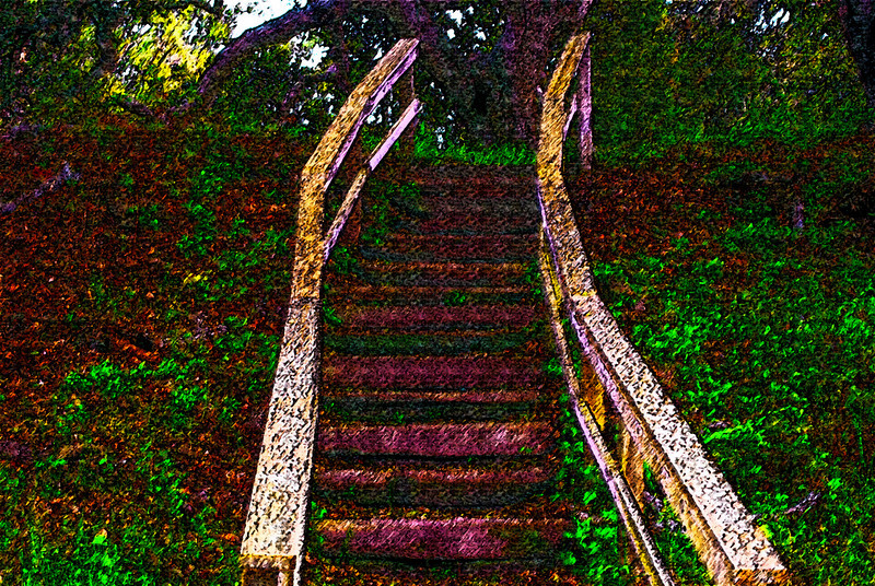 Steps<br /> Elkhorn Slough National Estuarine Research, Watsonville, California