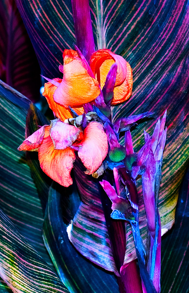 Flower <br /> Mission San Luis Obispo de Tolosa, San Luis Obispo, California