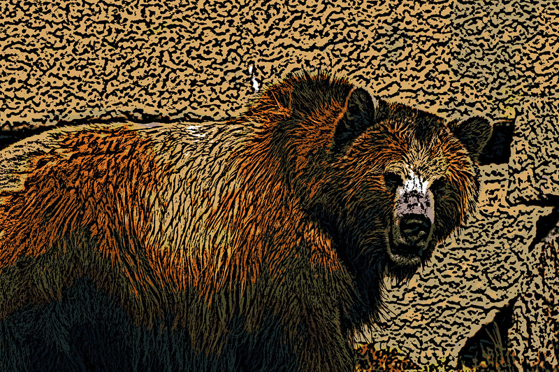 Grizzly Bear<br /> San Francisco Zoo, San Francisco, California
