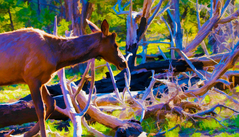 Mule Deer<br /> Grand Canyon, Arizona