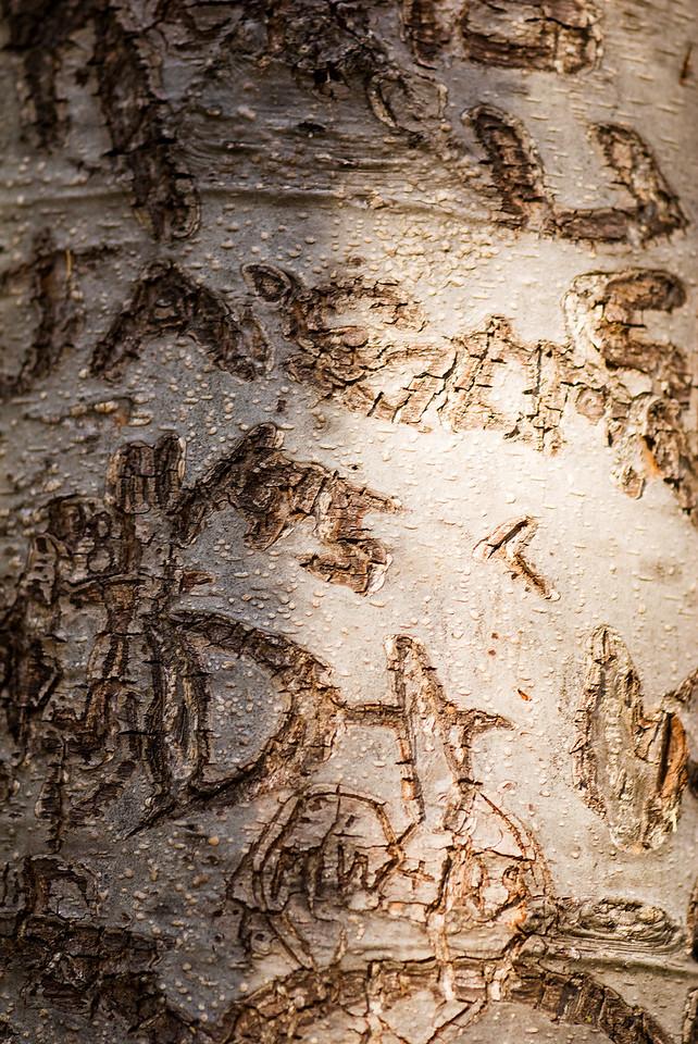 Vandalism Graffiti<br /> Spooner Lake, Nevada
